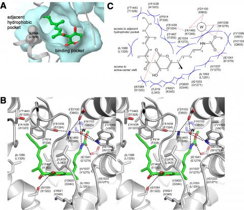 Small Molecule Inhibitors of Bacterial Transcription